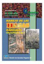 Manejo de las llagas radicales (Rosellinia sp.)
